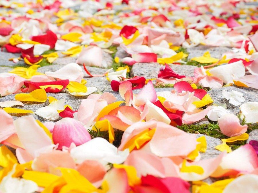 rose-petals-693570_1280