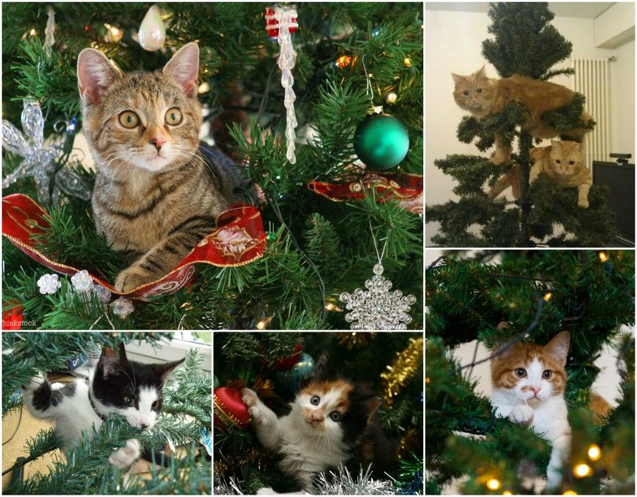 10 cats tree