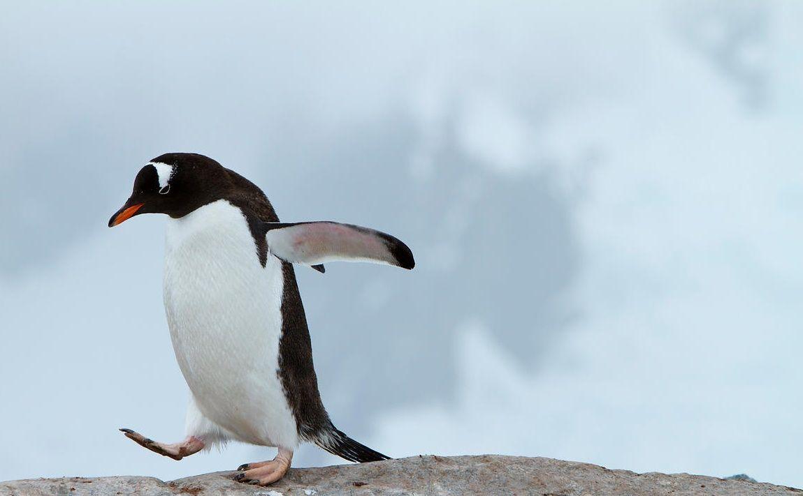 camminare-sul-ghiaccio-pinguino