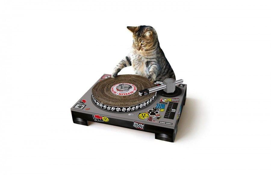cat-dj-turntable-scratch-deck