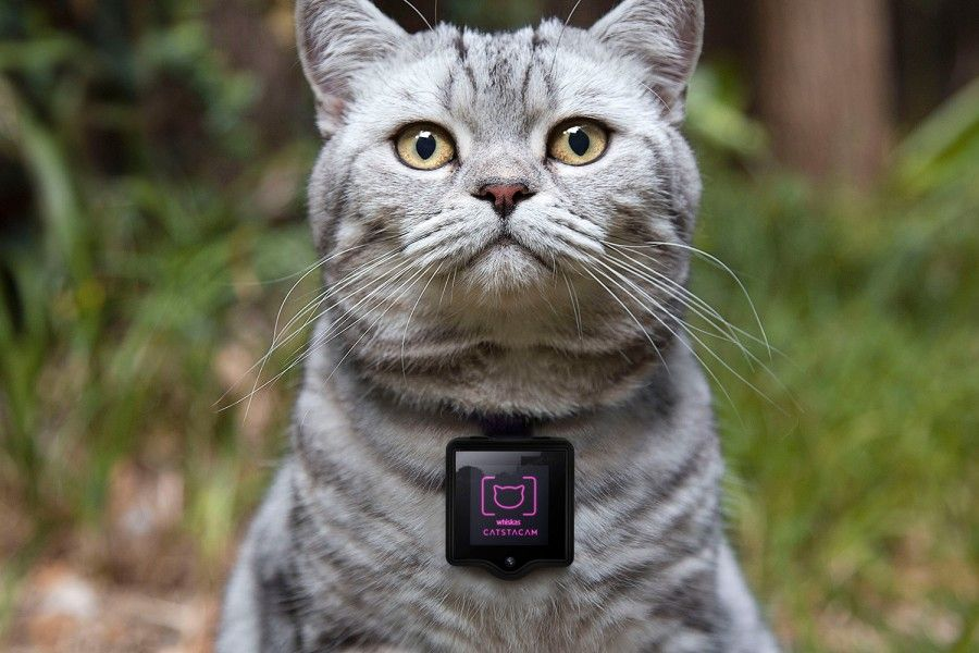 catstacam-allows-your-cat-to-take-instagram-photos-1