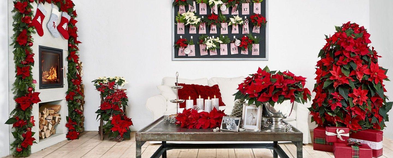 5 idee per decorare casa con la stella di natale bigodino - Idee per decorazioni natalizie per la casa ...