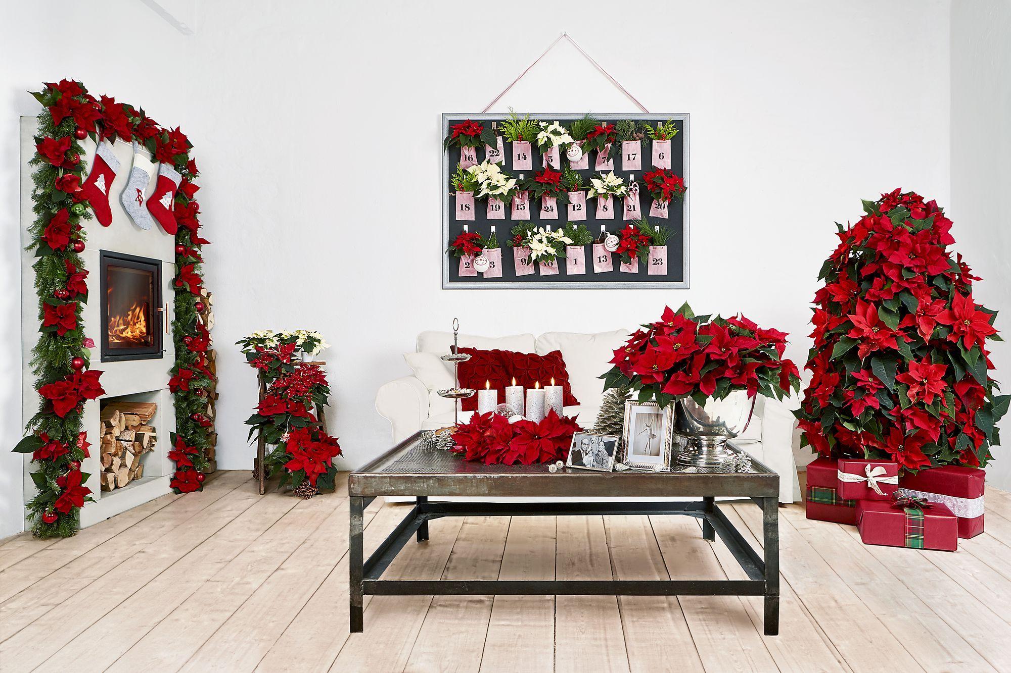 Sedie Decorate Per Natale : Idee per decorare casa con la stella di natale bigodino