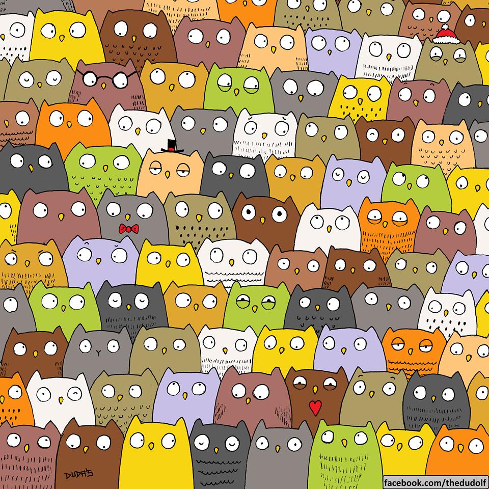 gatto-tra-i-gufi1