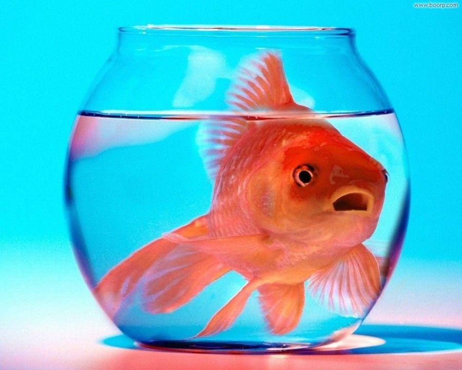 ...o un pesce rosso... che bella idea del cacchio!