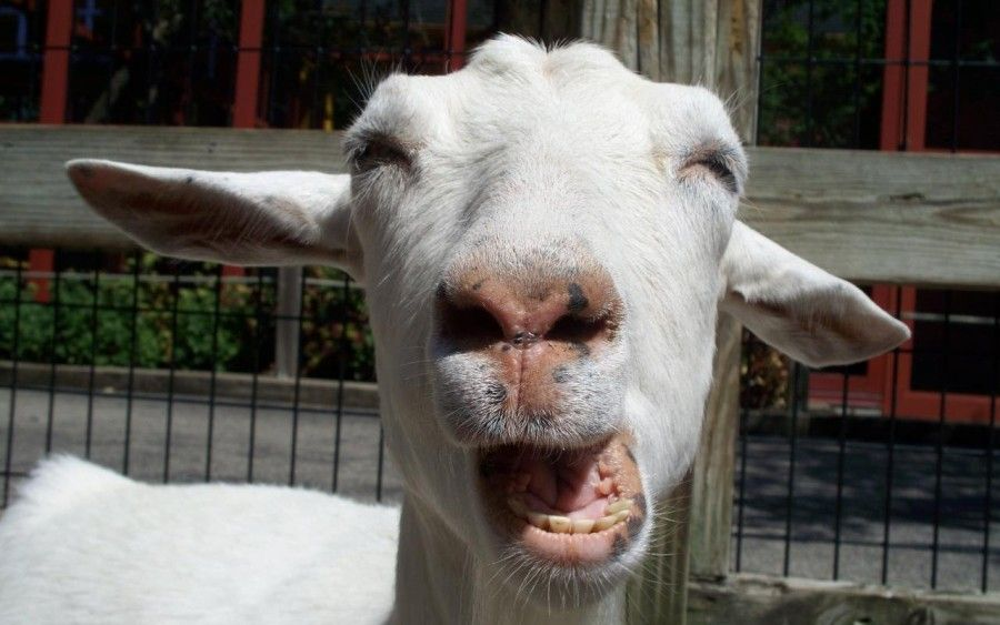 classica espressione che si assume quando ci si toglie il torrone dai denti