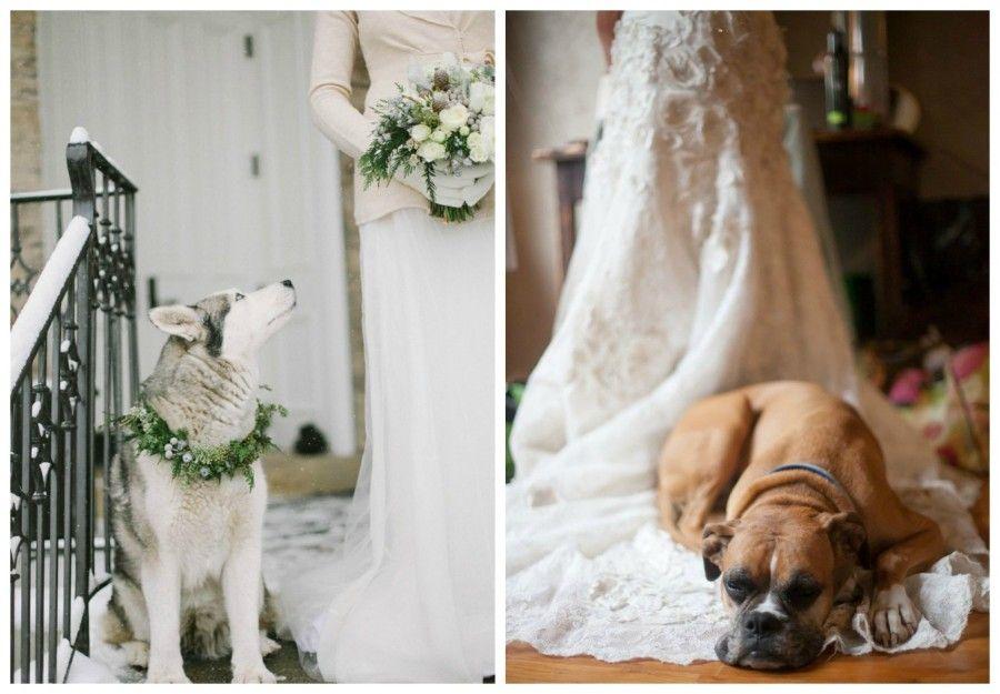 matrimonio-con-il tuo-cane