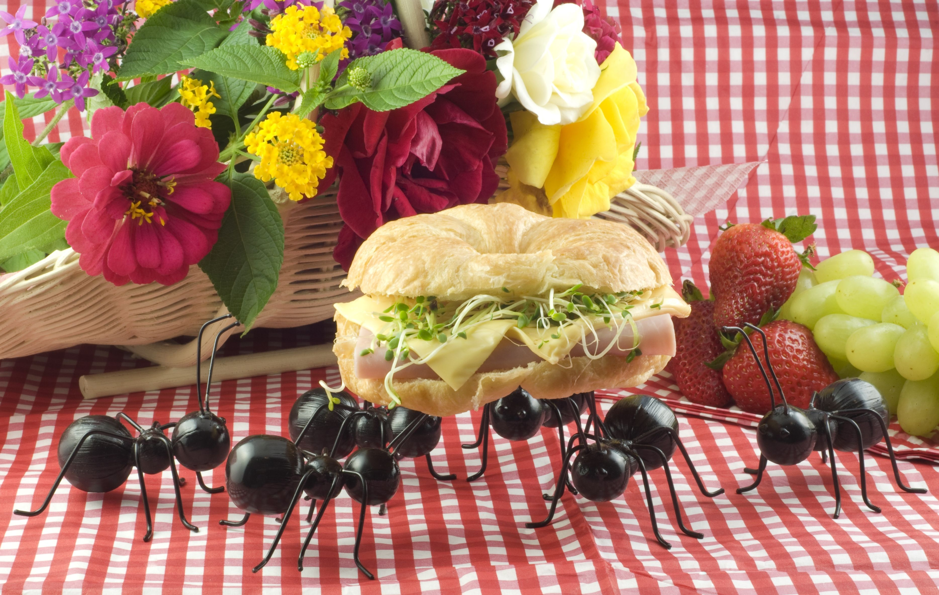A group of ants invading a picnic and carrying a sandwich, concept, vertical with copy space
