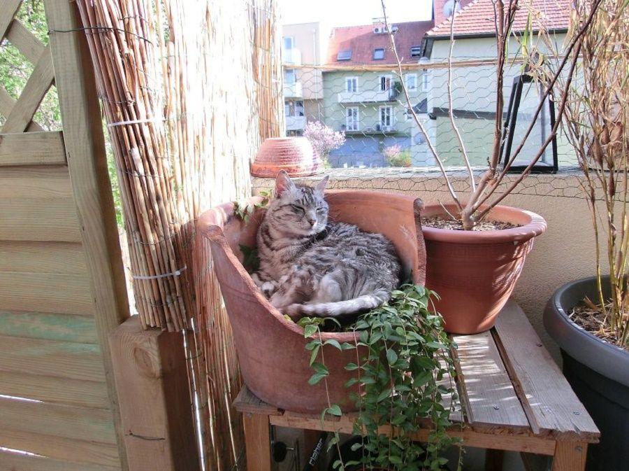 gatto-pedro