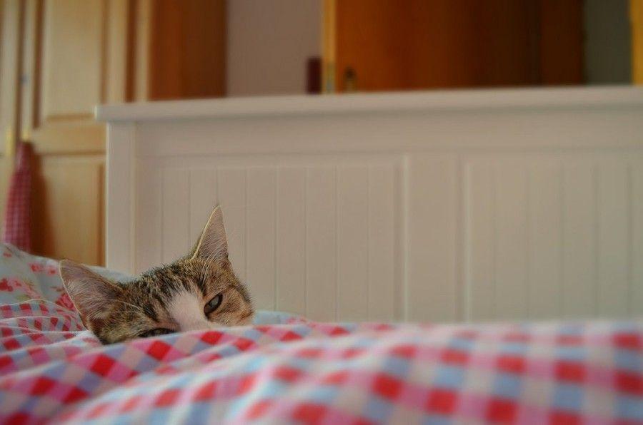 voglio essere un grosso gatto pigro