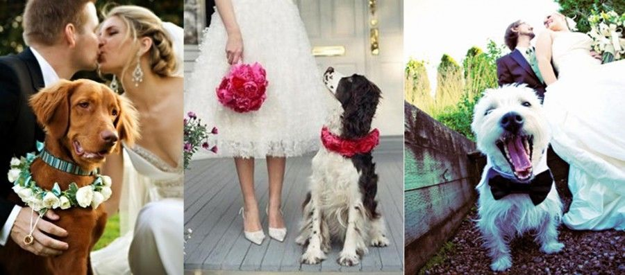 wedding-dogs