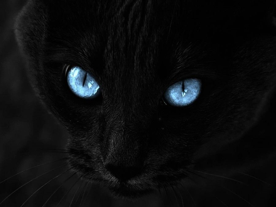 Black-Cat-With-Blue-Eyes-HD-Wallpaper-Desktop