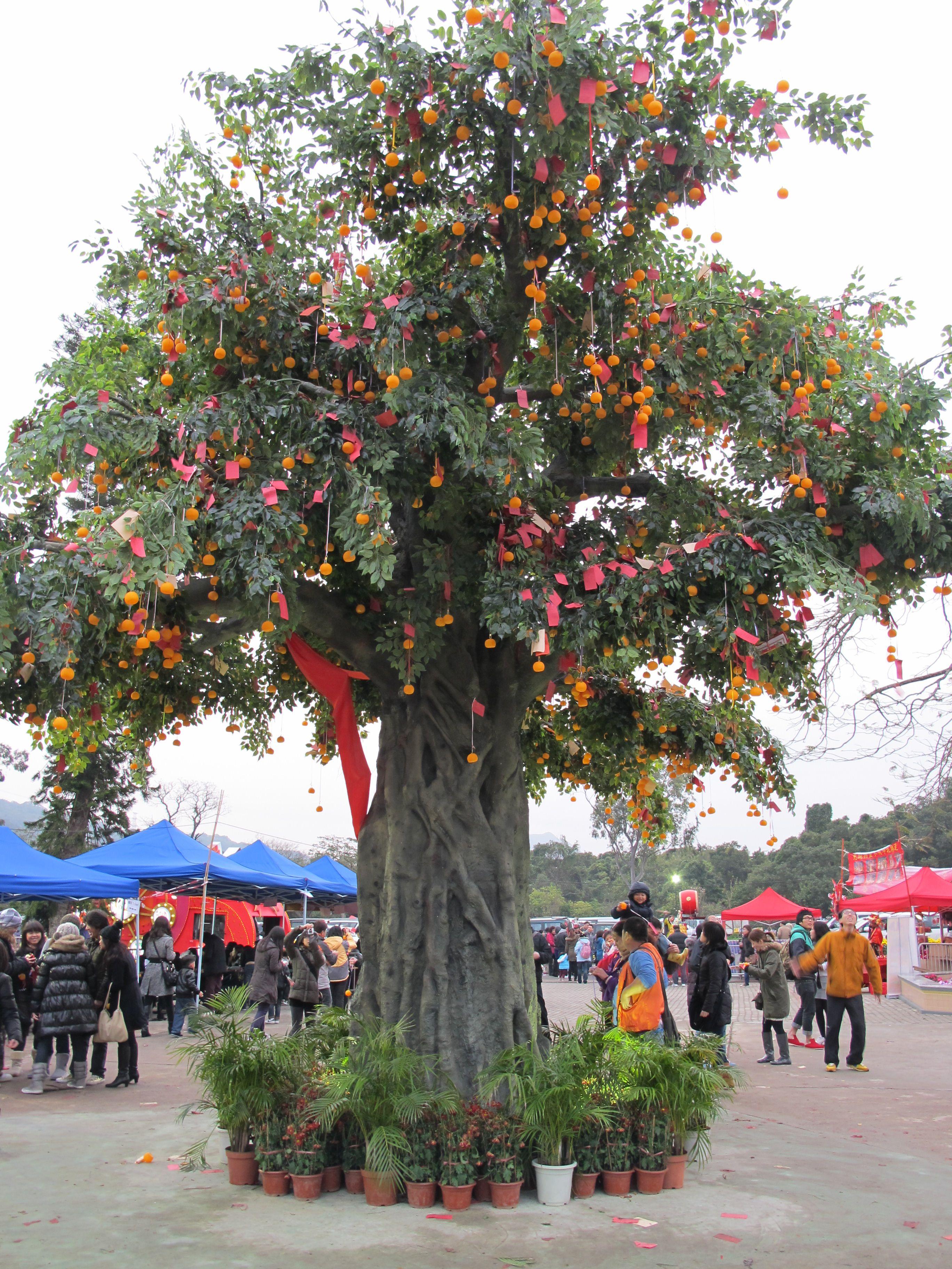 albero-desideri