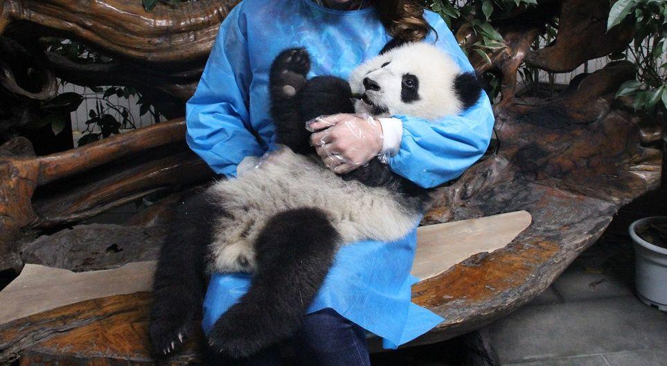 coccolare-panda
