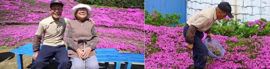 fiori-giappone