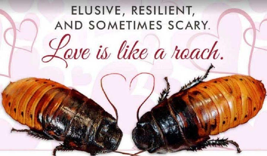 scarafaggio-madagascar