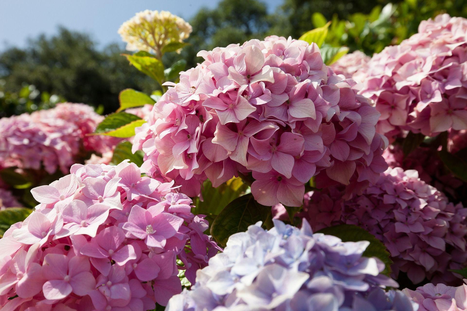 Fiori Che Amano Il Sole sole o ombra? scopri le piante ideali per il tuo balcone