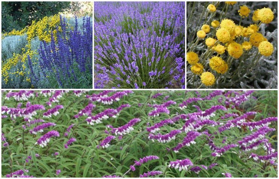 Sole o ombra scopri le piante ideali per il tuo balcone for Piante che amano il sole