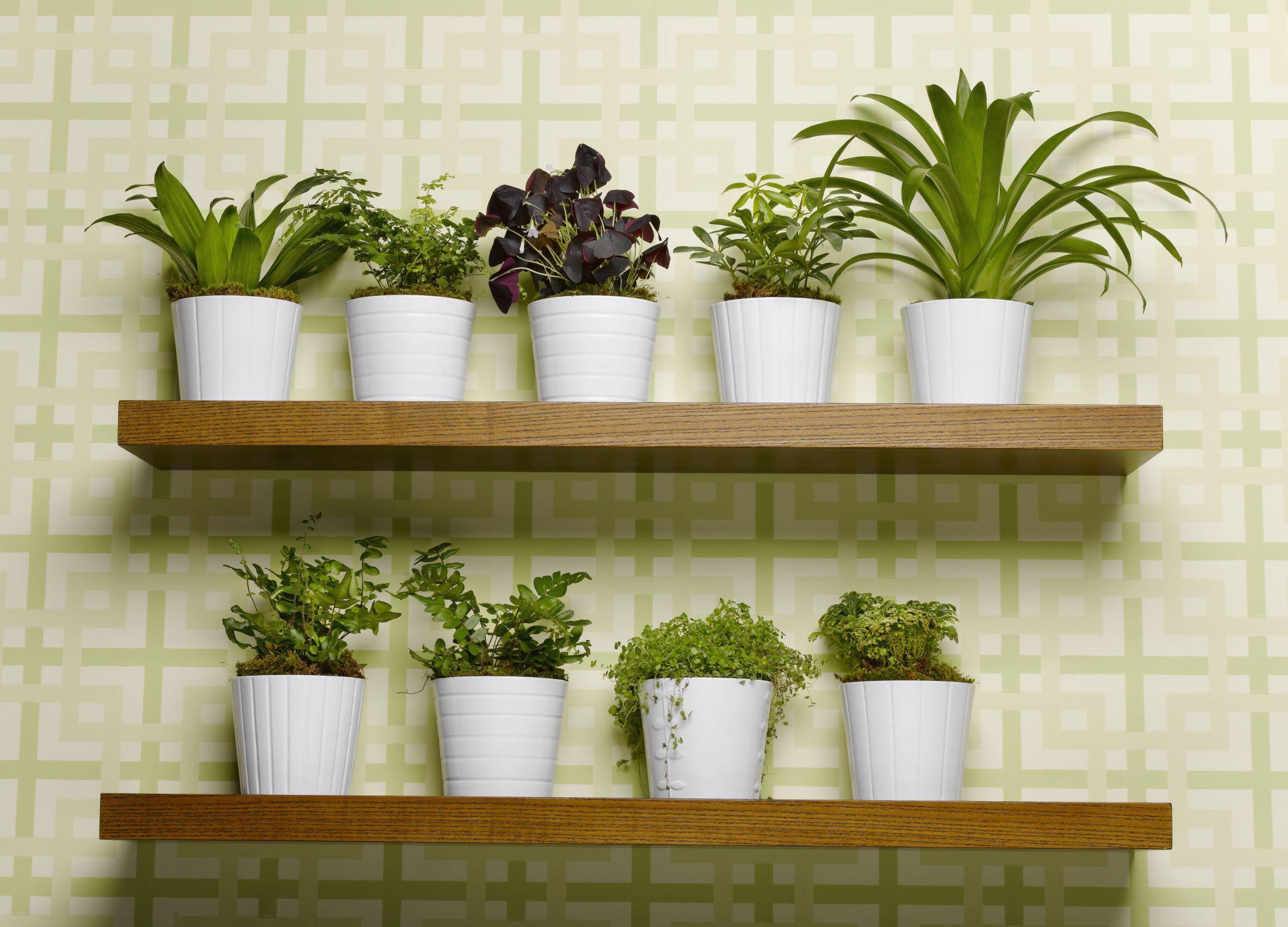 10 soluzioni Ikea per arredare casa con le piante