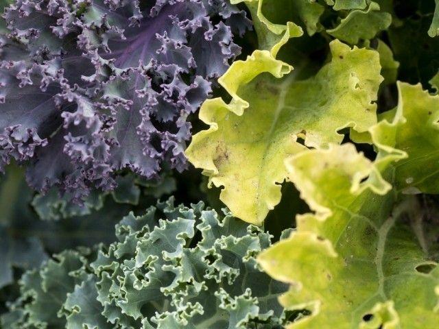 Cosa piantare nell 39 orto o sul balcone a marzo bigodino for Cosa piantare nell orto adesso