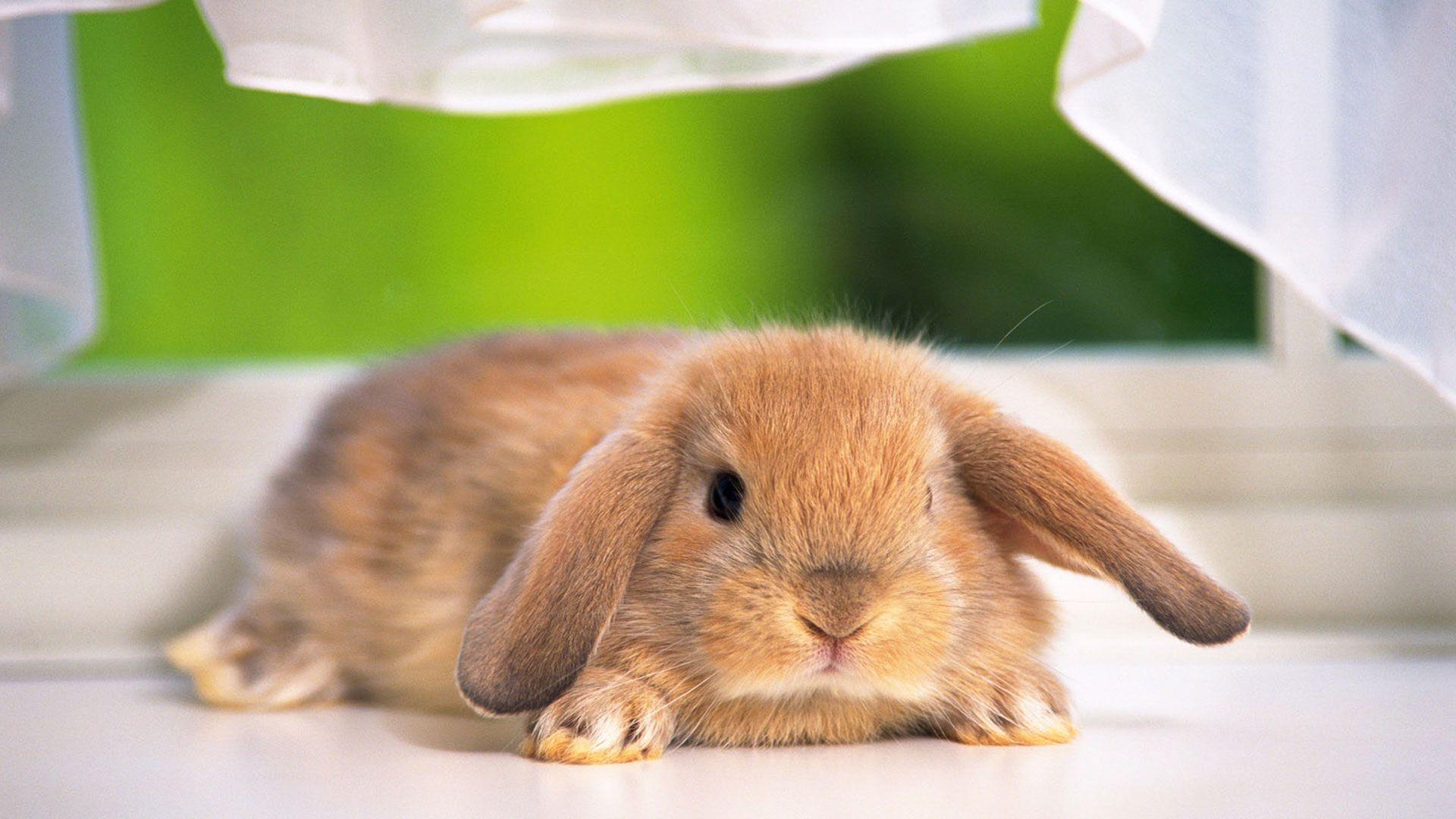 Come fare un coniglietto con un calzino: il video