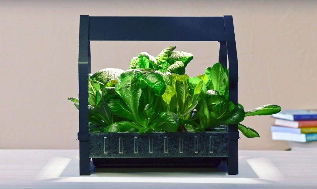 Anche Ikea ci propone il suo kit per fare l'orto in casa