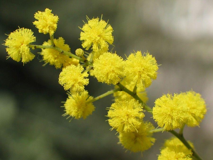 ...bruttarello e puzzolente... potevano scegliere un fiore migliore per festeggiarci!