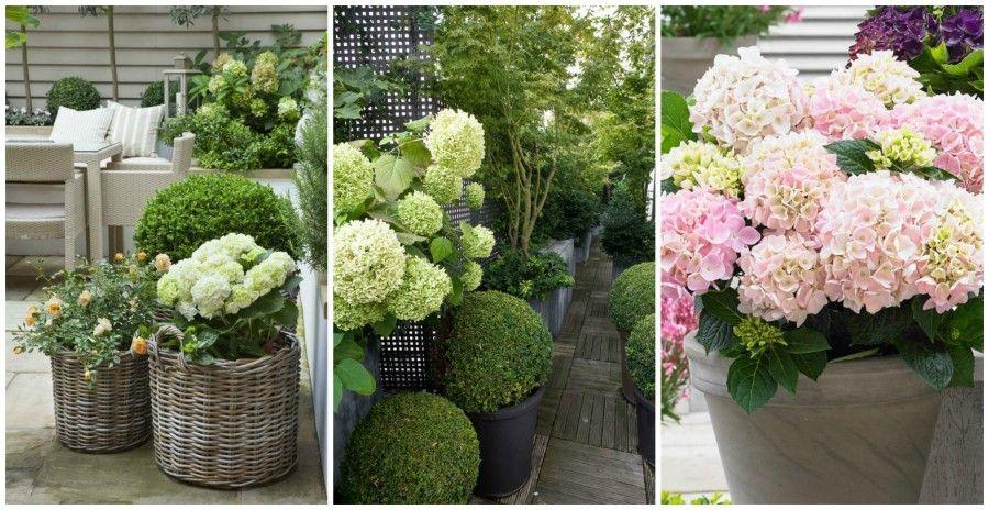 Ortensie Sul Balcone : Sole o ombra scopri le piante ideali per il tuo balcone