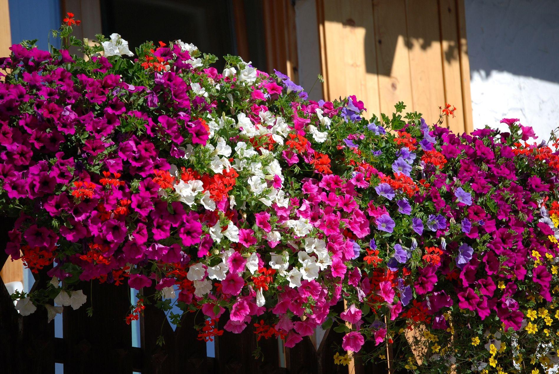 Fiori Da Balcone Ombra il segreto per avere un bellissimo balcone fiorito | bigodino