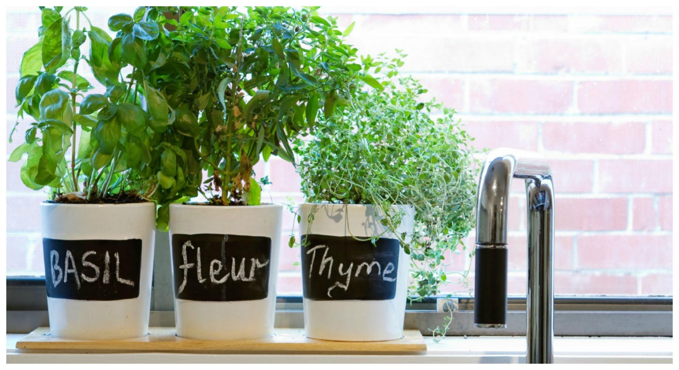 Come decorare la tua cucina con le erbe aromatiche
