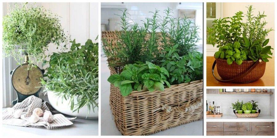 Come decorare la tua cucina con le erbe aromatiche bigodino for Come fare per costruire la tua casa
