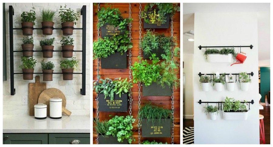Come decorare la tua cucina con le erbe aromatiche bigodino - Piante da parete ...