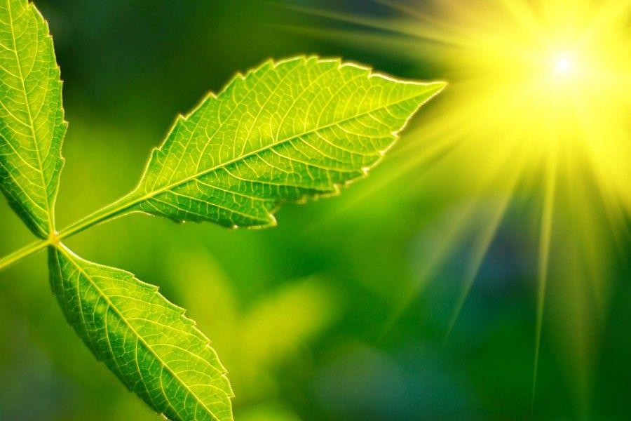10 trucchi per coltivare una pianta di limoni in un vaso for Piante che amano il sole