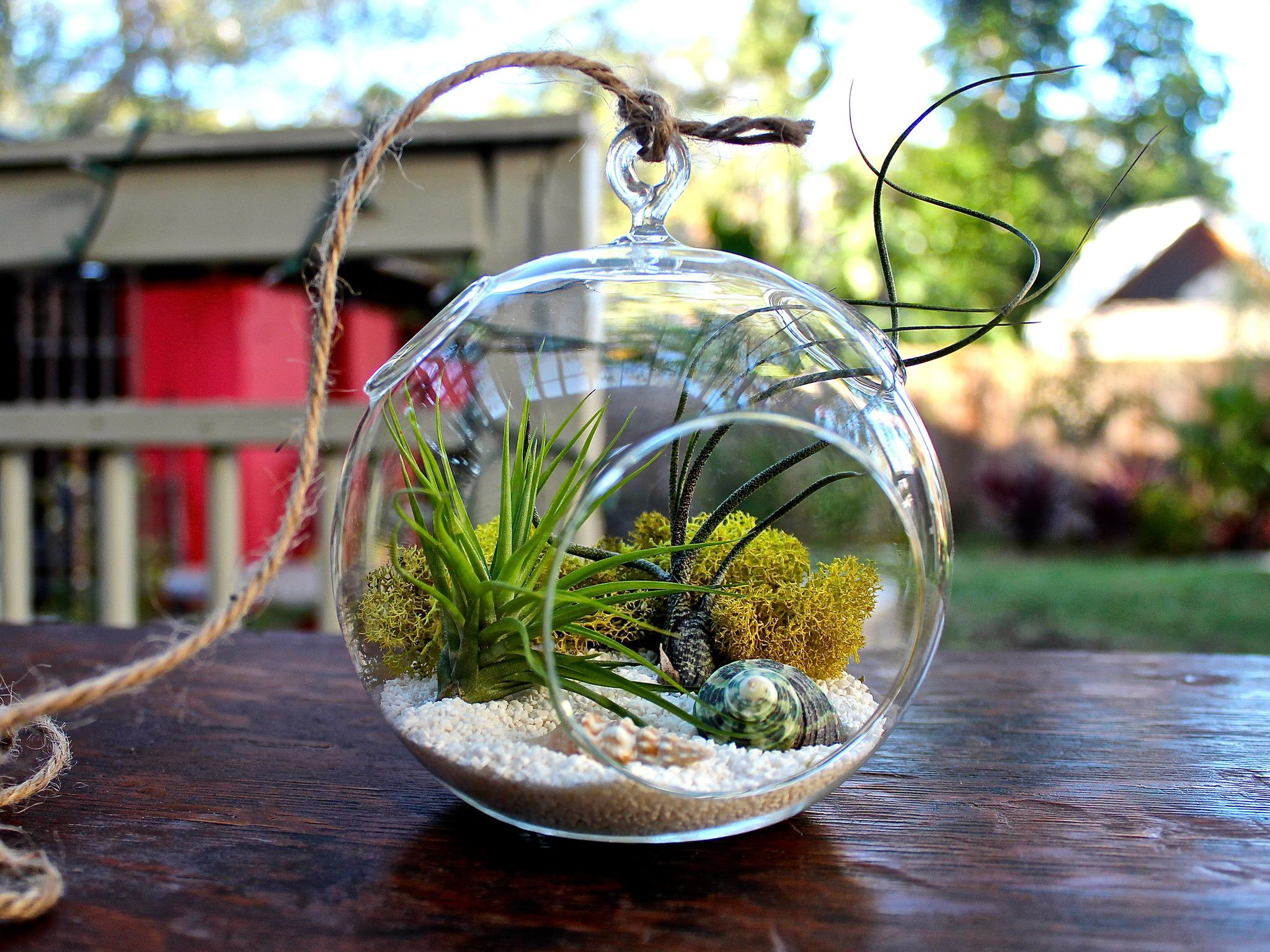 Terrario Per Piante Grasse diy: come fare un elegante terrario di piante grasse (video