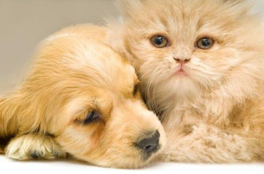 cani-gatti-casa2