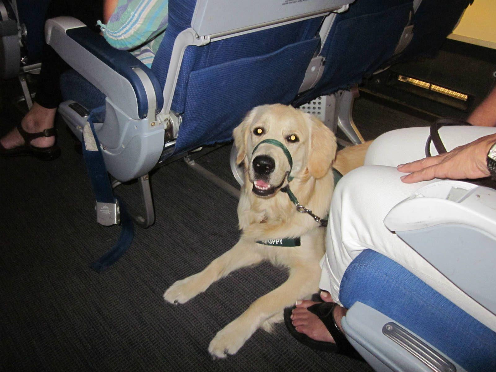 Aereo Privato Cani : Come viaggiare in aereo con i cani cabina bigodino