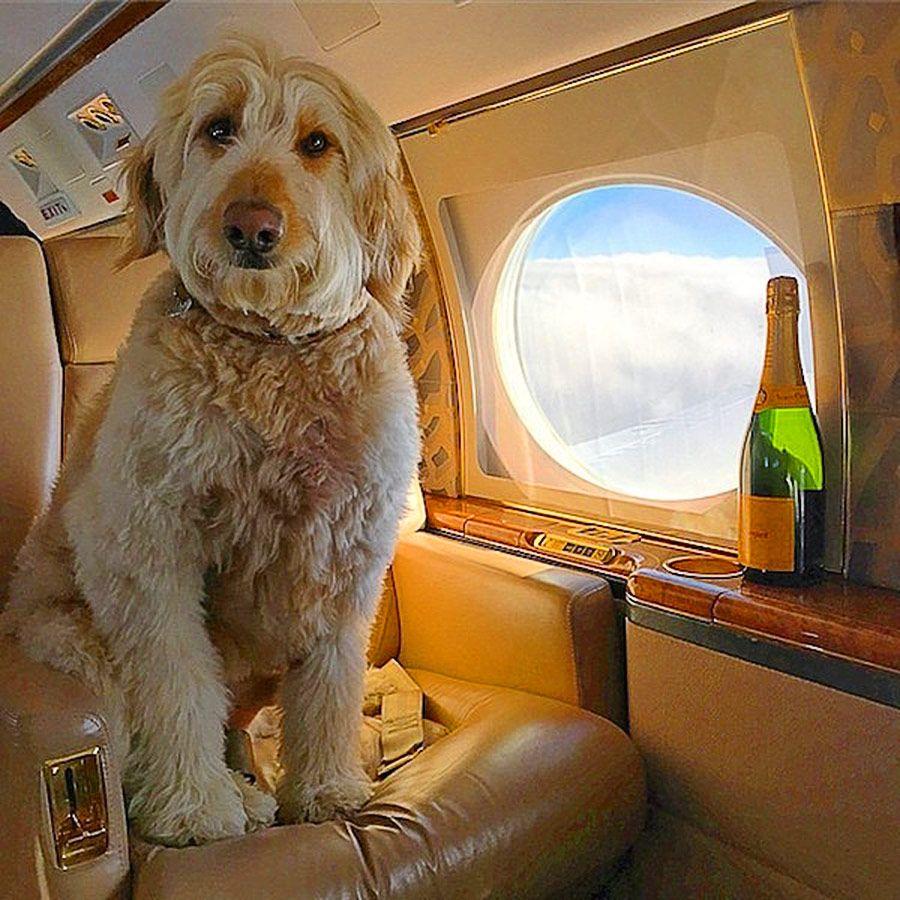 cani-viaggi-aerei2