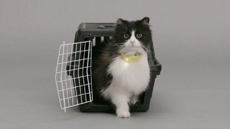 catterbox-collare-gatto