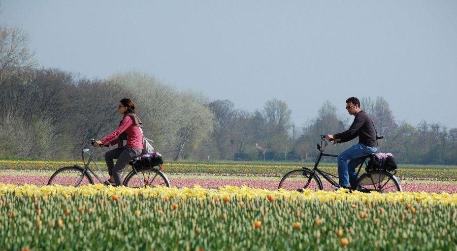 cid44243_fullimage_Fietsen-Dutch-Bike-Tours