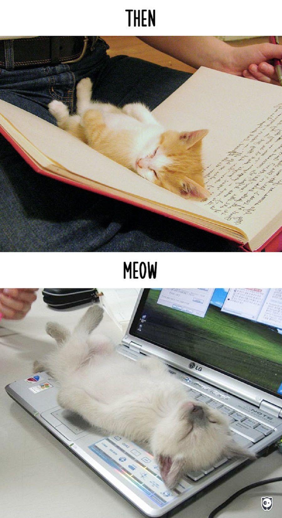 gatti-prima-dopo1