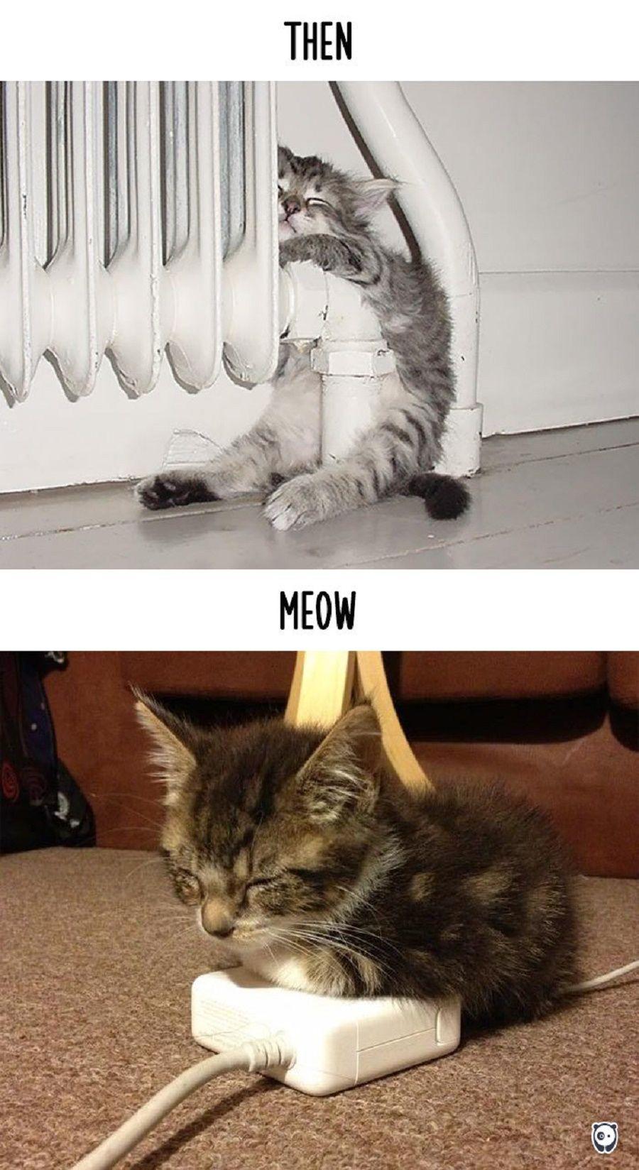 gatti-prima-dopo2