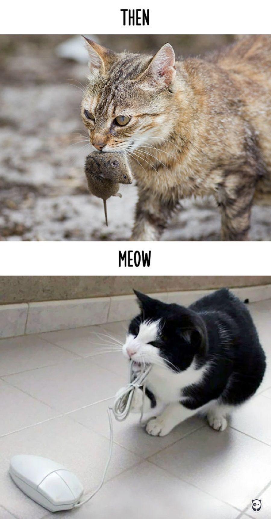 gatti-prima-dopo3