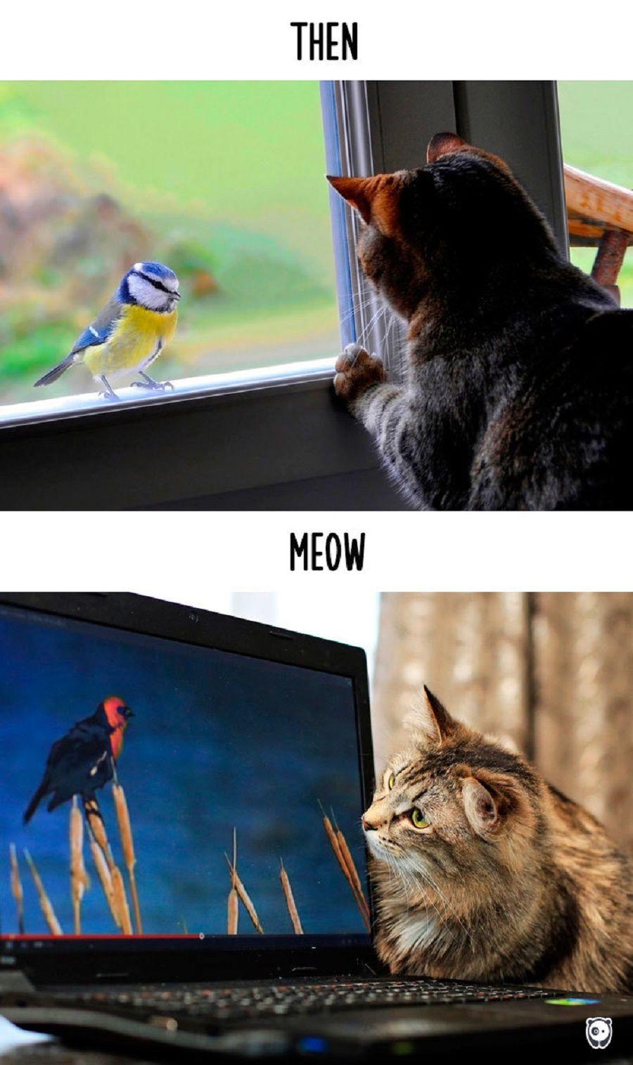 gatti-prima-dopo4
