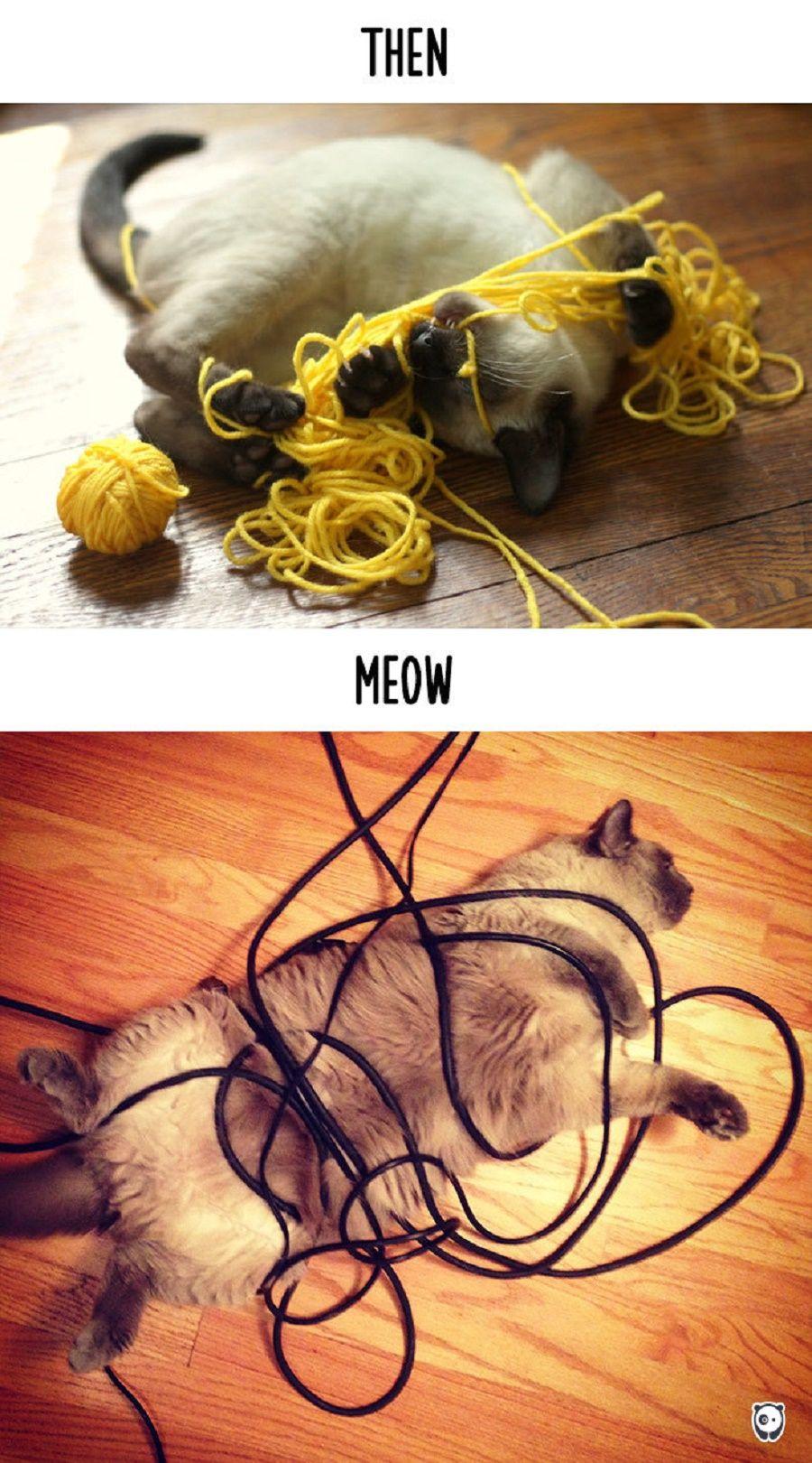 gatti-prima-dopo5