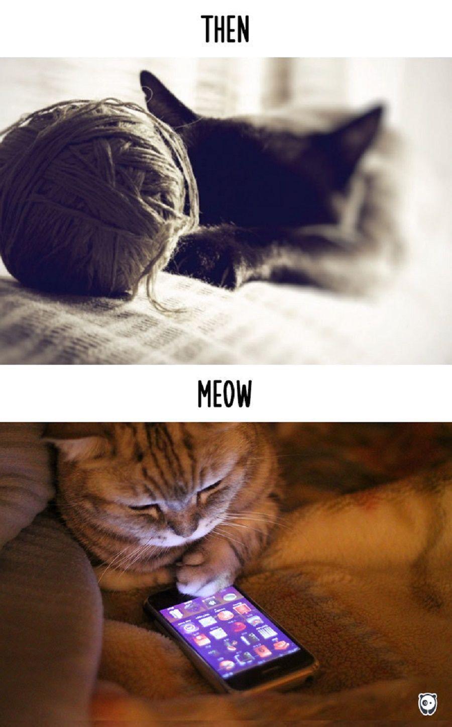 gatti-prima-dopo6