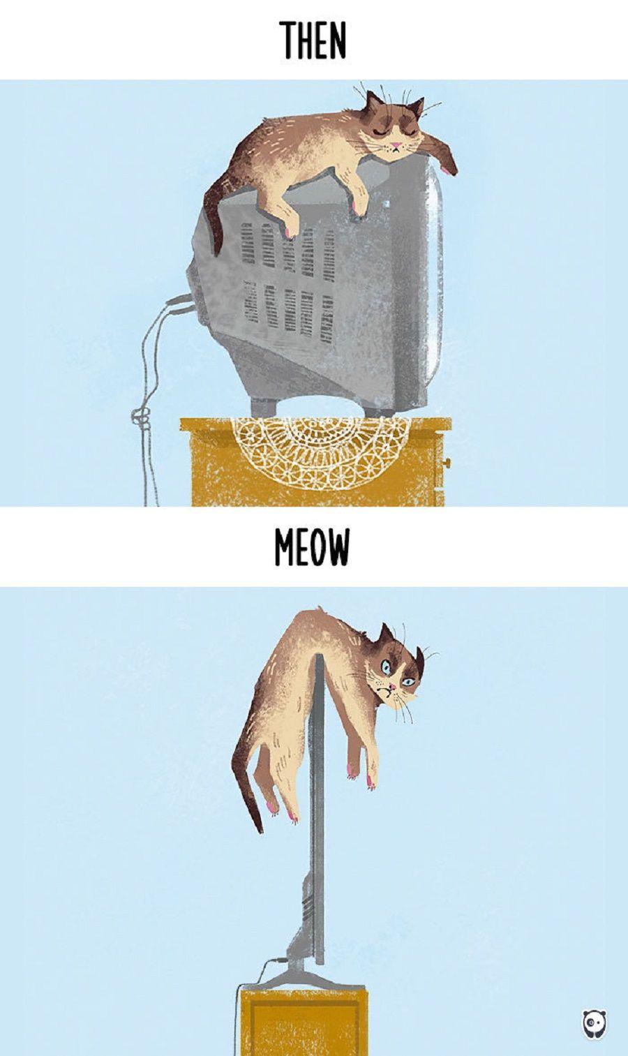 gatti-prima-dopo7