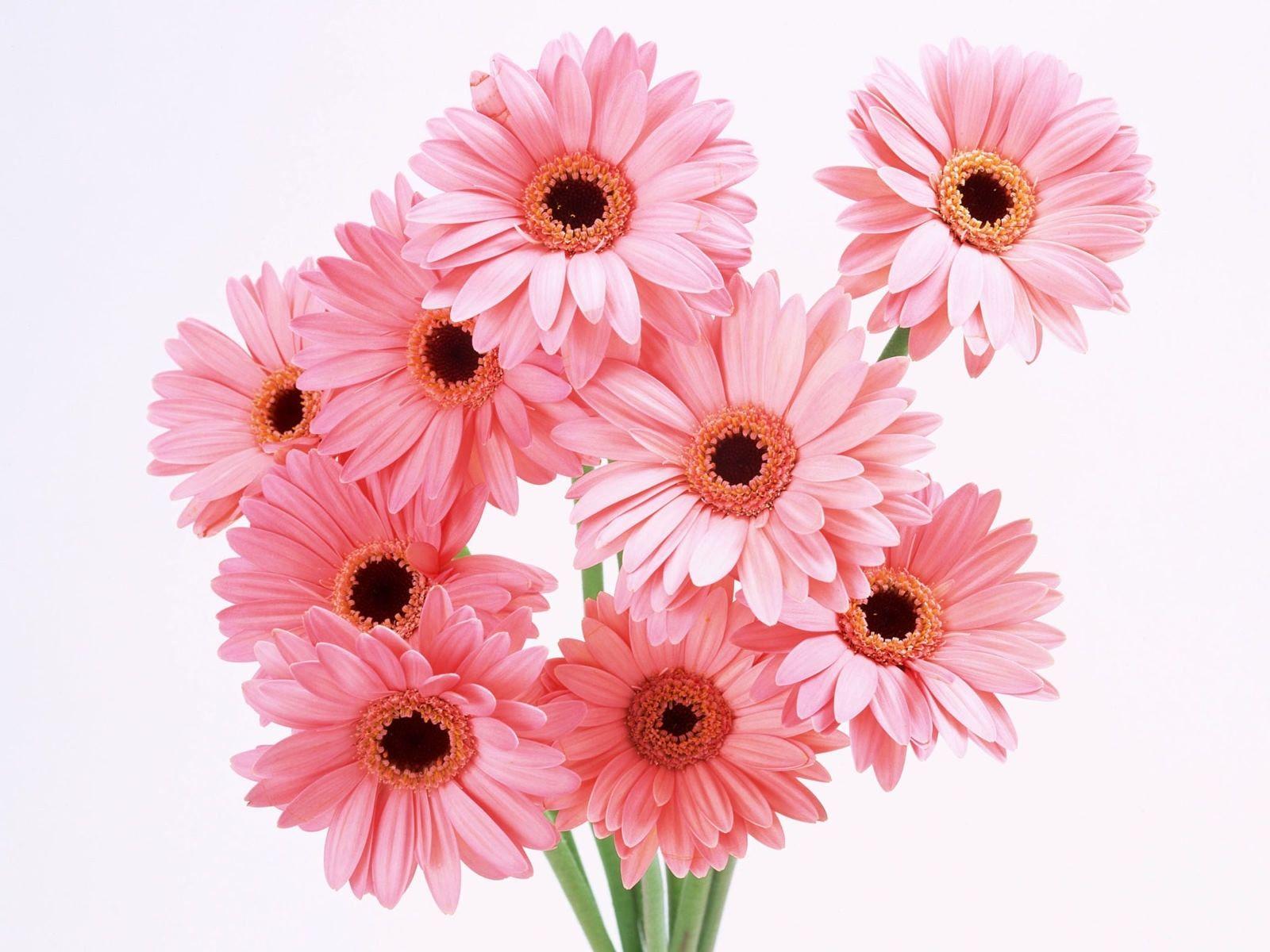 regalare-fiori2