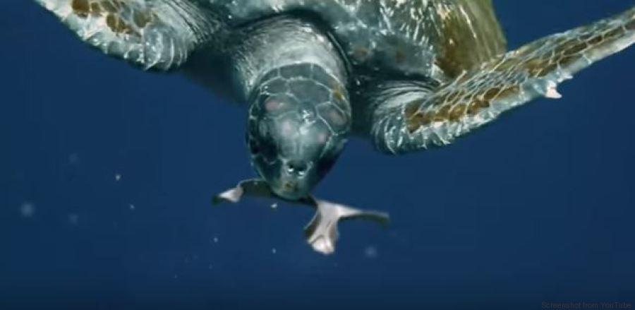 Gli animali possono ora mangiare gli imballaggi della for Vasche di plastica per tartarughe