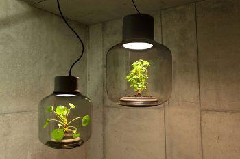 Le piante che crescono nelle lampade
