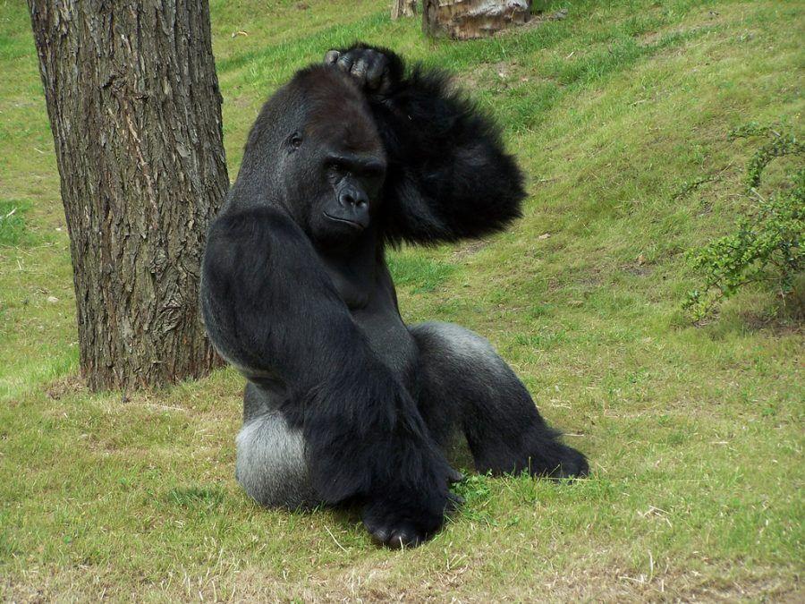 ...pure le scimmie hanno più decoro nel grattarsi...